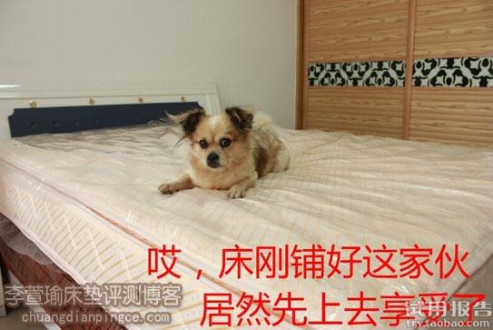 全球顶尖床垫品牌/五星级酒店专用/美国金可儿美玉试用报告!